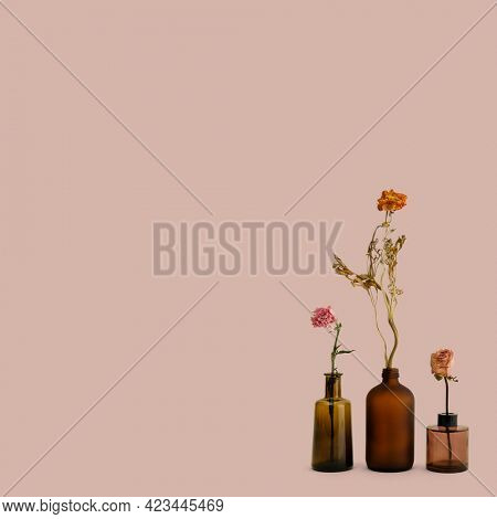 Dried flowers in brown glass vases on a pink background