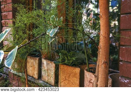 Decoration Of The Window With Pots With Home Plants Such As Kalanchoe, Asparagus And Ficus Starlight