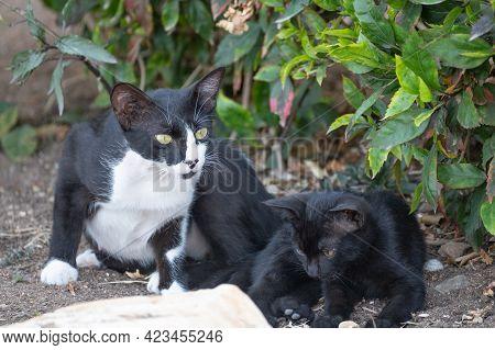 Homeless Mom Cat With Kitten. Homeless Animals. Cat Mom With Her Kitten. Homeless Mother With Her Ba