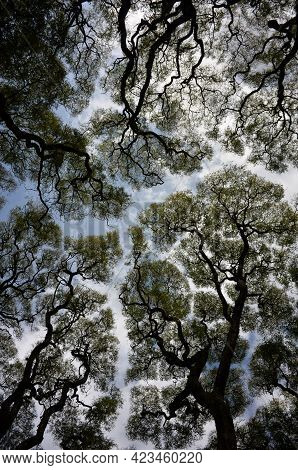 Wide Angle Abstract Shot Of Trees Against The Sky In Buenos Aires, Argentina