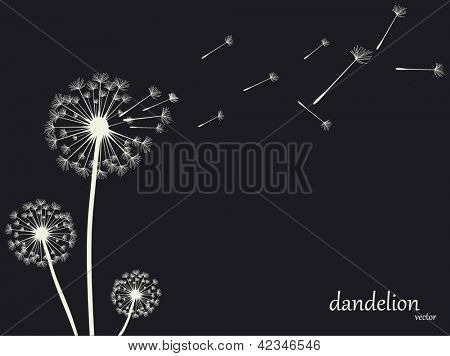 Dandelion Vector.Illustration