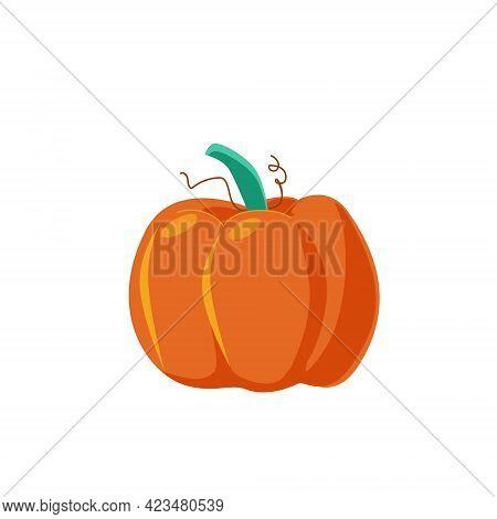 One Big Ripe Orange Pumpkin For Thanksgiving, For Halloween. Vegetables From The Garden