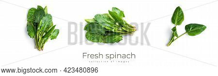 Fresh Spinach On A White Background. Spinach Isolated.