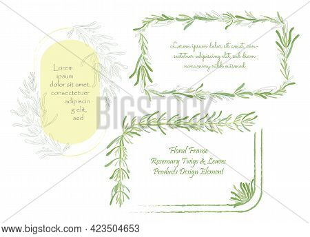 Set With Frames Made Of Hand Drawn Rosemary Twigs. Culinary Herbs Outlined With Brushes And Colored