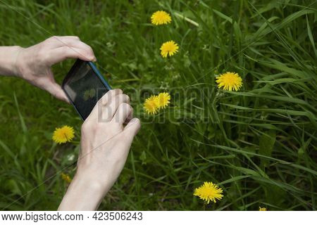 A Man Uses A Smartphone To Take Photos.photo Of Flowers On Your Smartphone.