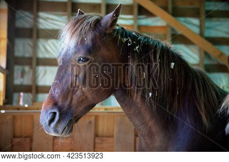 Close Up Of A Horse In Stable Equine Animal Ranch Farm