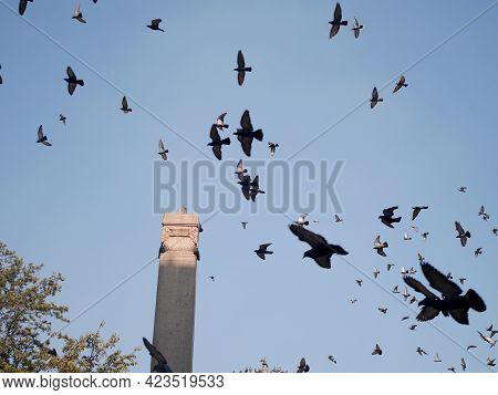 Dove Bird Wait Nepali People And Foreign Travelers Feeding Food With Pigeon Birds Drinks Water And F