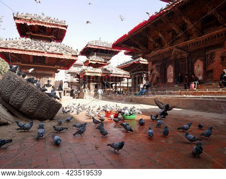 Dove Bird Wait Nepali And Foreign Travelers Feeding Food With Pigeon Birds Drinks Water And Flying I