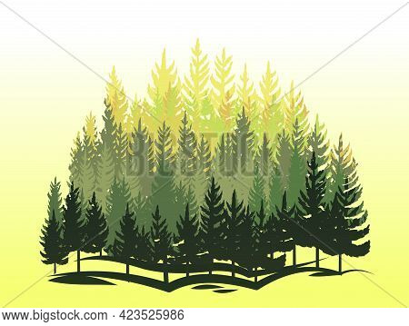 Forest Silhouette Scene. Landscape With Coniferous Trees. Beautiful Morning View. Pine And Spruce Tr