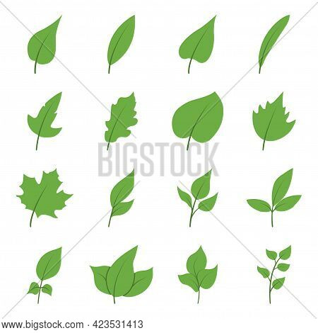 Set Of Tree Leaves In A Flat Style. Vector Illustration Of Leaves And Branches With Leaves Isolated