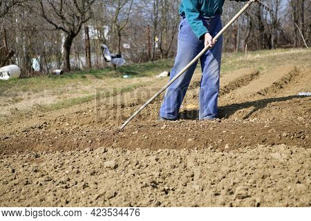 A Farmer Cultivates Shoveled Soil Before Planting In The Spring In A Traditional Village