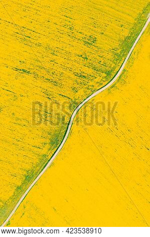 Aerial View Of Agricultural Landscape With Flowering Blooming Rapeseed, Oilseed In Field Meadow In S