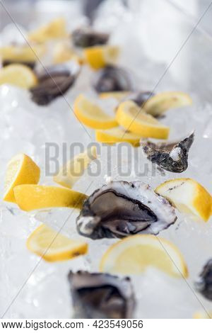 Beautiful Appetizer Fresh Oysters On Ice And Lemon. Luxury Seafood Background. Healthy Nature Food.