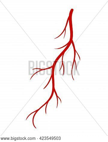 Human Veins. Red Silhouette Vessel, Arteries Or Capillaries On White Background. Concept Anatomy Ele