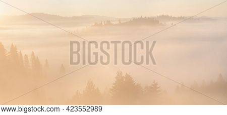 Yellow Foggy Sunrise In The Mountains. High-resolution Panorama With Pine Thee Forest And Mountain S