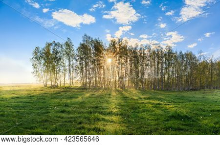 Sunbeams Pour Through Trees In Misty Forest