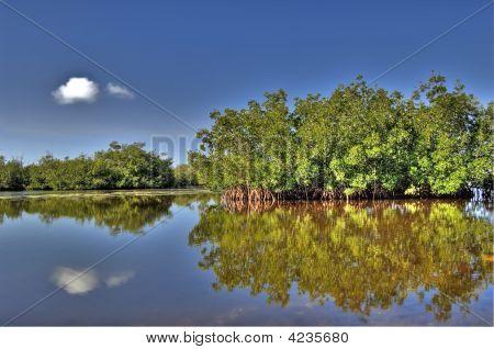 Estuary And Mangroves