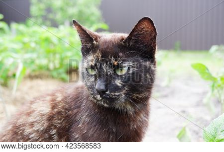 Portrait Of A Mongrel Multicolored Cat. Close-up Of A Cat