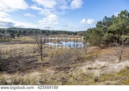 Dutch Dune Reserve With A Pond With Little Water, Wild Grass, Dry Heather, Green Trees And Pines, Sp
