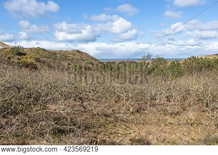 Hill With Bare Wild Plants, Dry Heather And The Sea In The Background In The Dutch Dunes Nature Rese