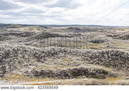 Dune Nature Reserve With Hills, Hiking Trails, White Sand, Grass, Dry Heather And Trees In The Backg