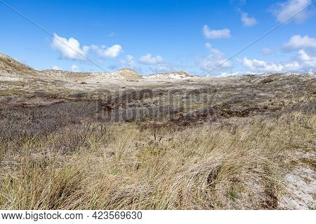 White Sand, Wild Grass, Dry Heather And Hills In The Background In A Dutch Dune Reserve, Spring Day