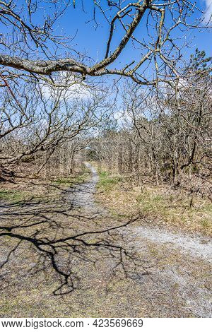 Branches Of Small Bare Trees, A Hiking Trail And Wild Grass In A Dutch Dune Reserve, Sunny Spring Da