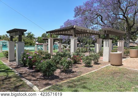 BREA, CALIFORNIA - 9 JUN 2021: The Rose Garden with the Plunge in the background in City Hall Park.