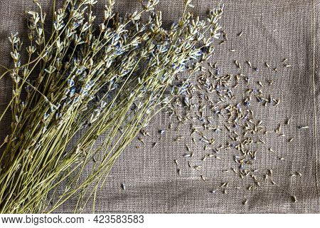 Bouquet Of Dry Lavender Is On Monochrome Gray Linen Fabric. Fallen Small Flowers Are Abstractly Scat