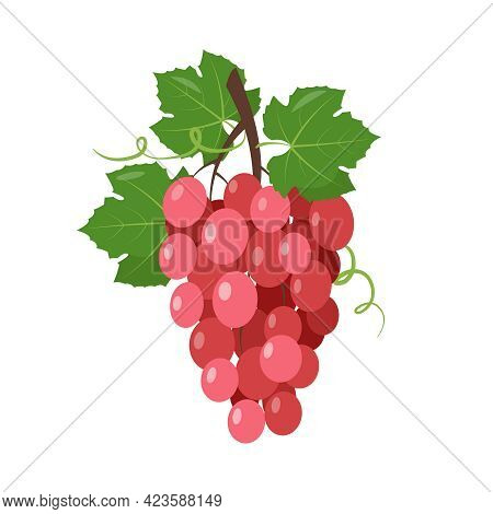 Red Wine Grape Icon. Pink Muscatel Grapes Bunch With Berries And Leaves Isolated On The White Backgr