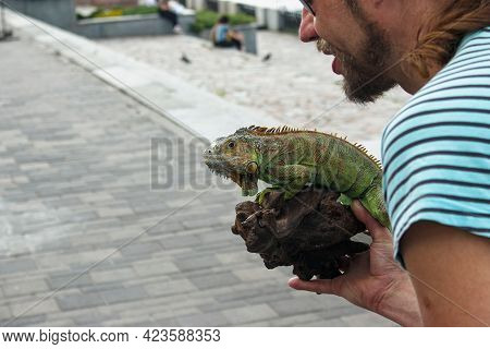 Dnepropetrovsk, Ukraine - 06.12.2021: Close Up Of A Male Green Iguana Or American Iguana With Spines