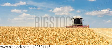 Scenic Front View Big Modern Industrial Combine Harvester Machine Reaping Gather Golden Ripe Wheat C