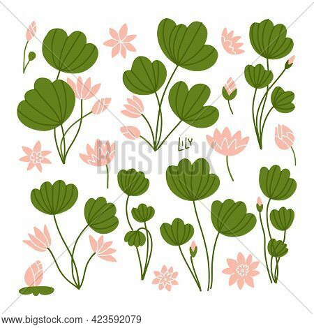 Green Lily Pads With Lotus Flowers. Side View. Pink Flowering Water Lilies And Green Leaves. Floral