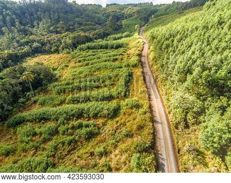 Aerial View Of Dirty Road With Forest And Vegetation Around