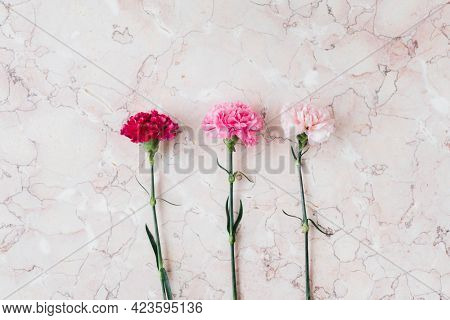Blooming pink carnation flower on a marble background