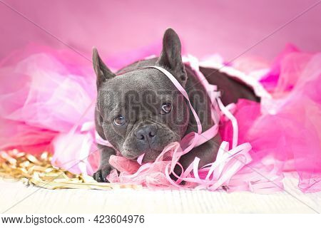 Funny French Bulldog Dog In Pink Tutu Skirt Playing With Party Streamers