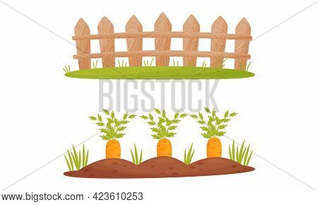 Fence Or Hedge And Garden Bed With Growing Carrot Crop Vector Set