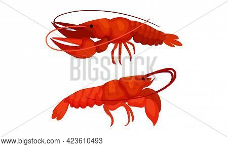Cooked Red Lobster As Large Marine Crustacean With Muscular Tail And Claw Pair Vector Set