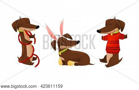Cute Dachshund Character With Long Body And Collar Playing Wearing Knitted Sweater And Rabbit Ear Ve