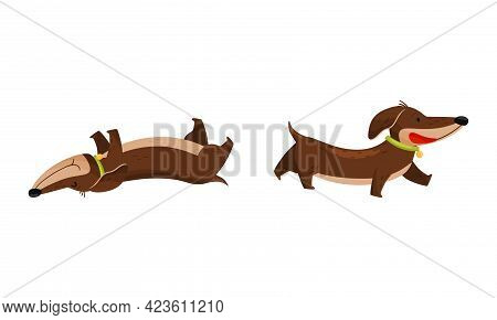 Cute Dachshund Character With Long Body And Collar Walking And Rolling On Its Back Vector Set