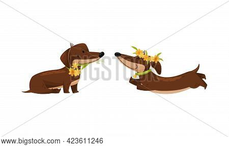 Cute Dachshund Character With Long Body And Collar Wearing Floral Wreath And Running Vector Set