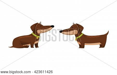 Cute Dachshund Character With Long Body And Collar Sitting And Standing Vector Set