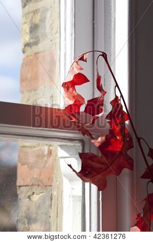 dried red leaves near window