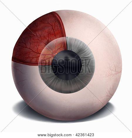 Menschliches Auge-Anatomie-Malerei