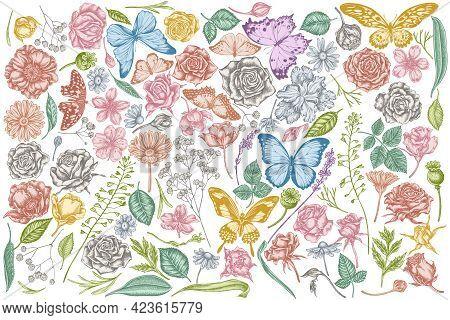 Vector Set Of Hand Drawn Pastel Shepherds Purse, Heather, Iris Japonica, Sakura, Gypsophila, Chamomi