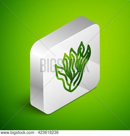 Isometric Line Seaweed Icon Isolated On Green Background. Underwater Seaweed Spirulina, Aquatic Mari