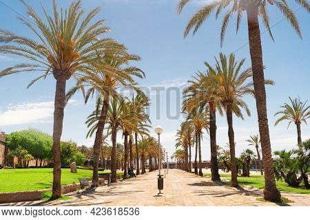 Palma De Majorca Capital Of Majorca, Spain, Balearic Islands