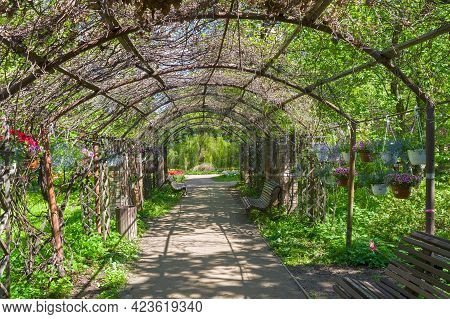 Moscow, Russia - May 16, 2021: Pergola In The Park. Aptekarsky Ogorod (a Branch Of The Botanical Gar