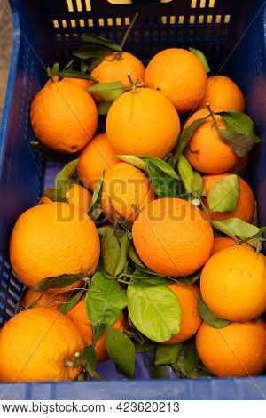 Soller, Street Shop With Oranges On Local Marcet, Mallorca