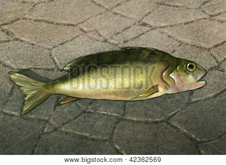 ein Fisch ohne Wasser digitaler Werke